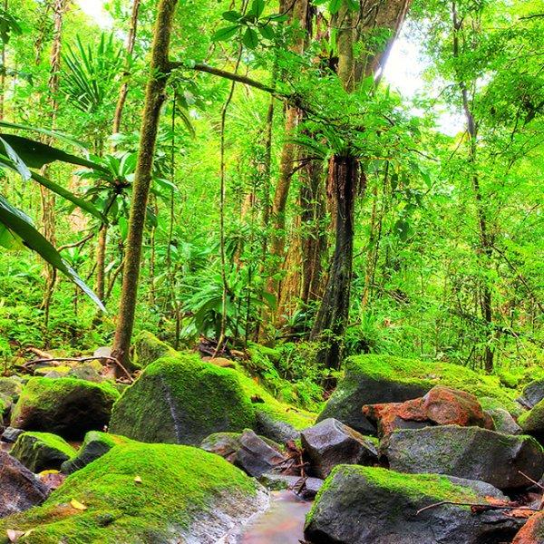 Dschungel im Masoala Nationa