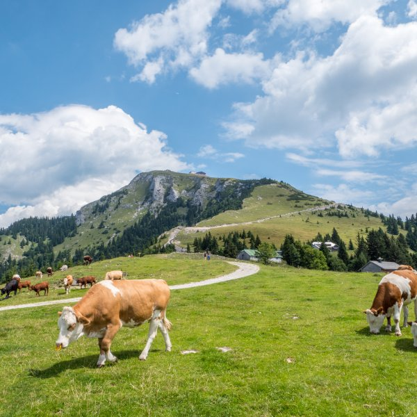 Salzkammergut Landschaft