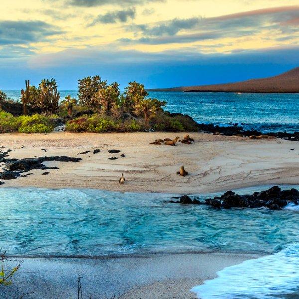 Galapogos Inseln
